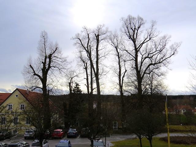 Baumgruppen