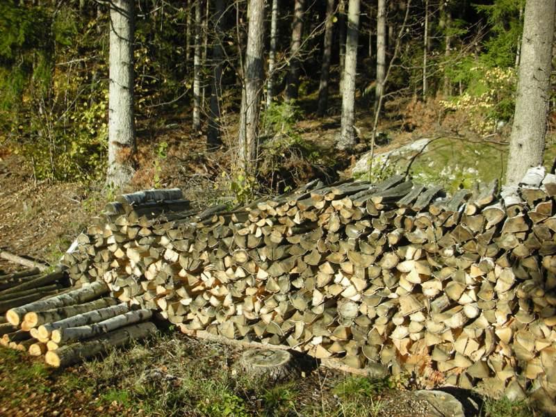 Holzgewinnung