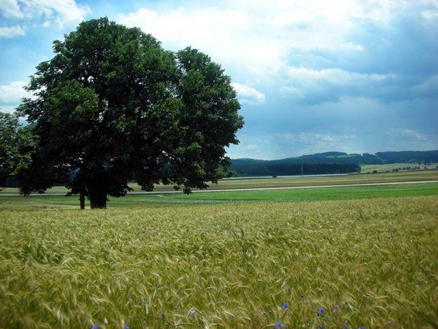 Zwettl - Friedersbach nördliche Tour