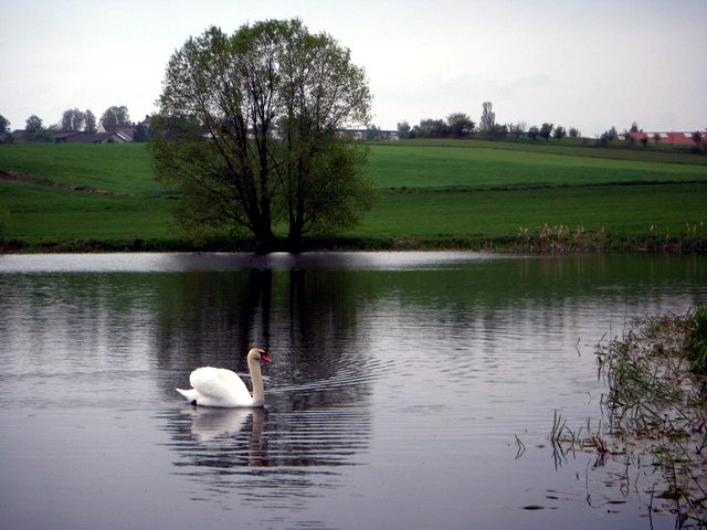 Waldteich