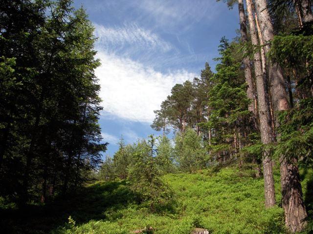Im Pierbichlwald