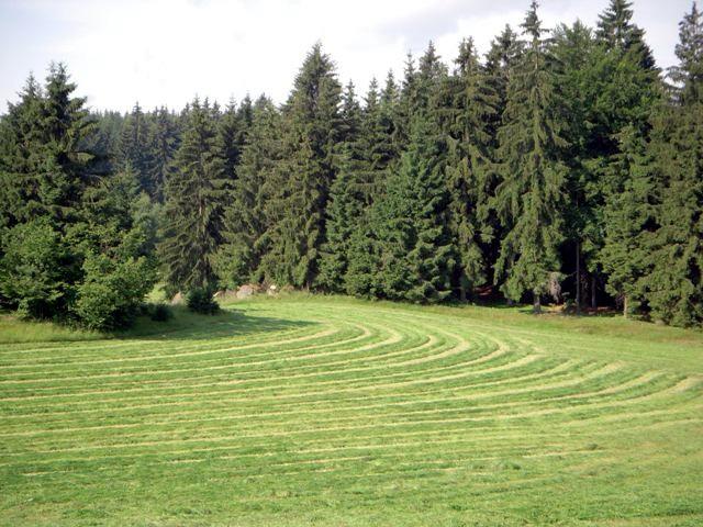 Waldviertler Natur