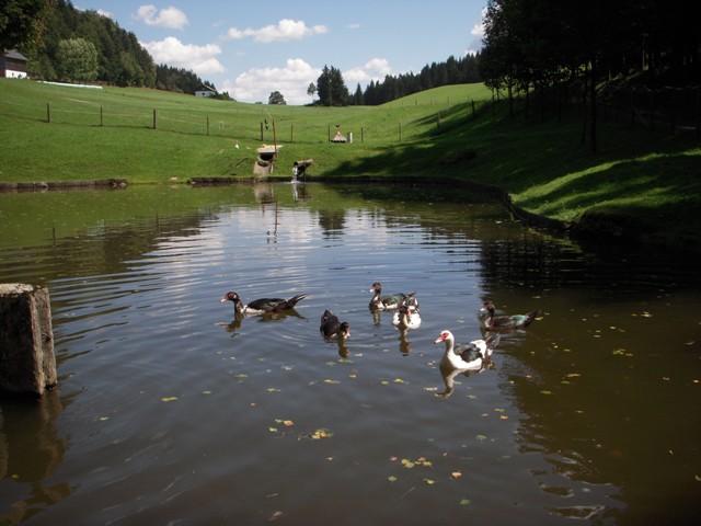 Teich bei Reitern
