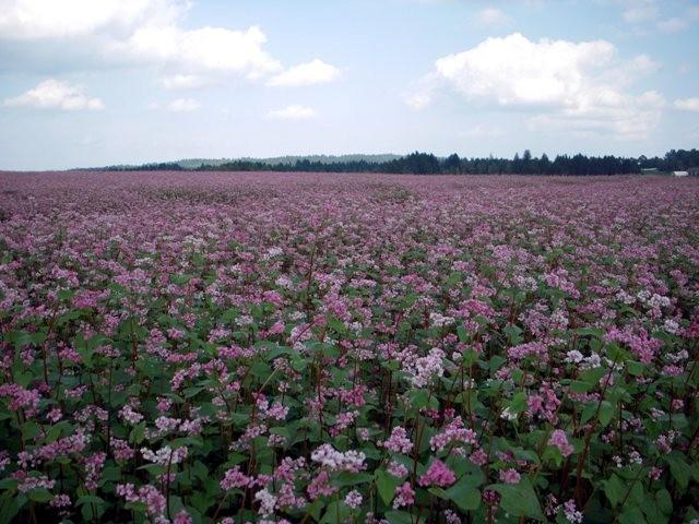 rosarotes Land