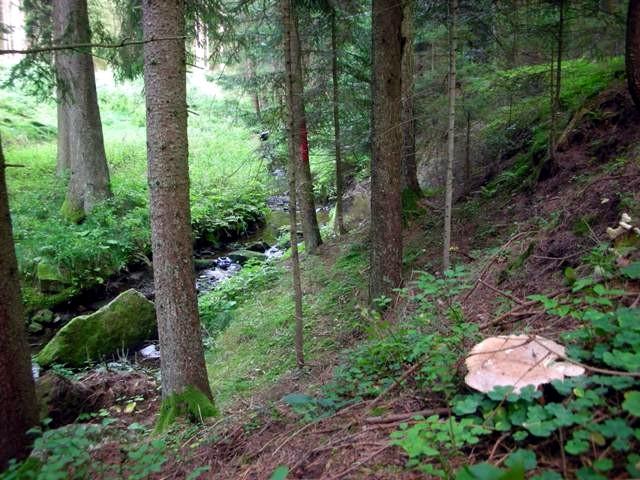 Der Weißenbach