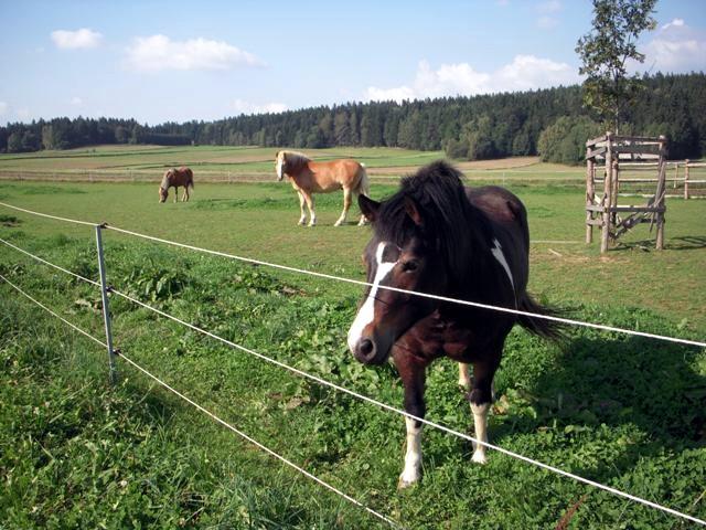 für die Pferde