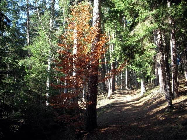 Der Wald beginnt