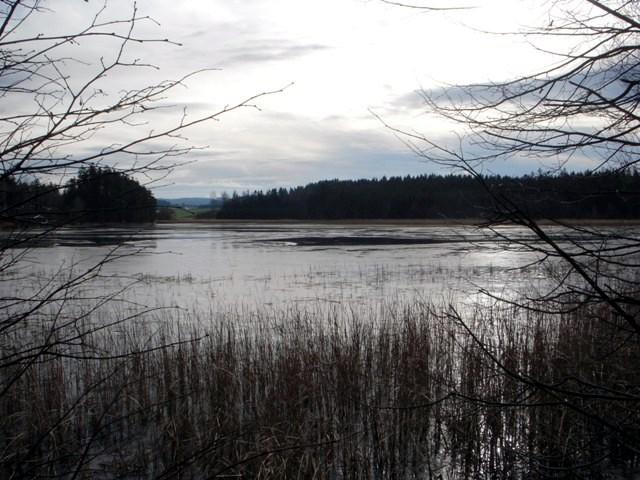Schönauer Teich