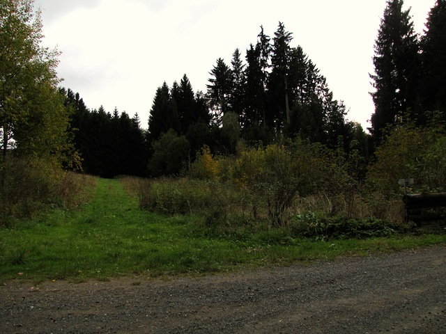 Wiesenweg zum Waldrand