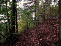 Im Pfarrwald