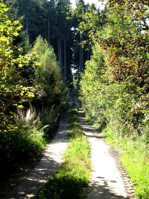 Im Säuwald