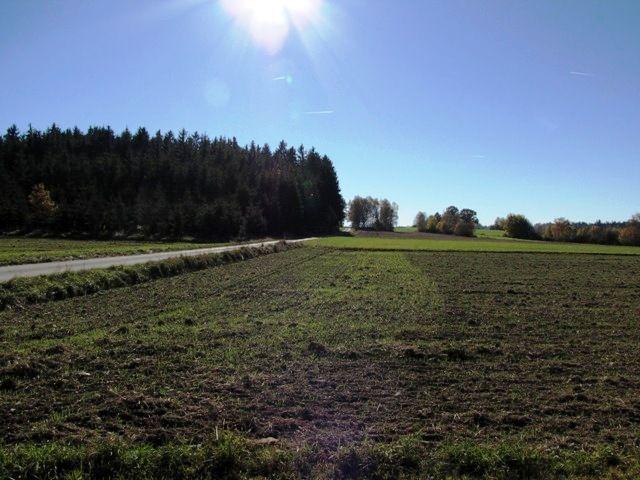 Der Galgenberg