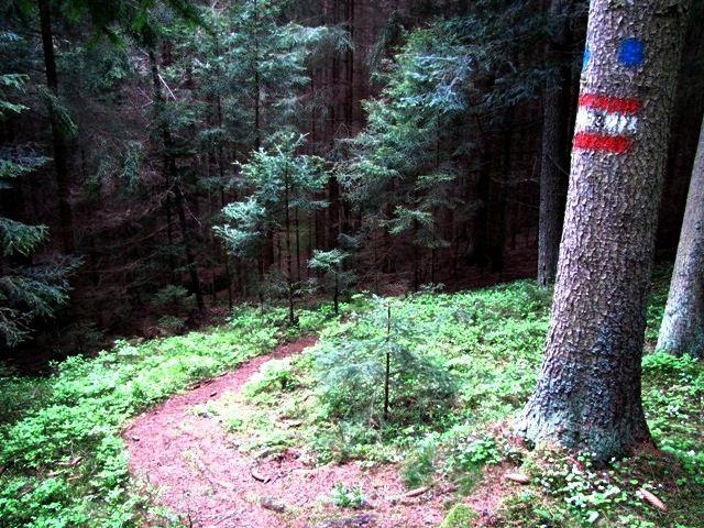 ins Weißenbachtal