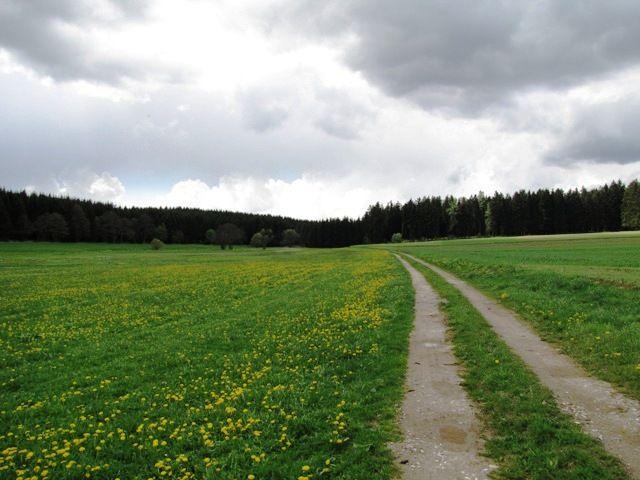 Richtung Wald