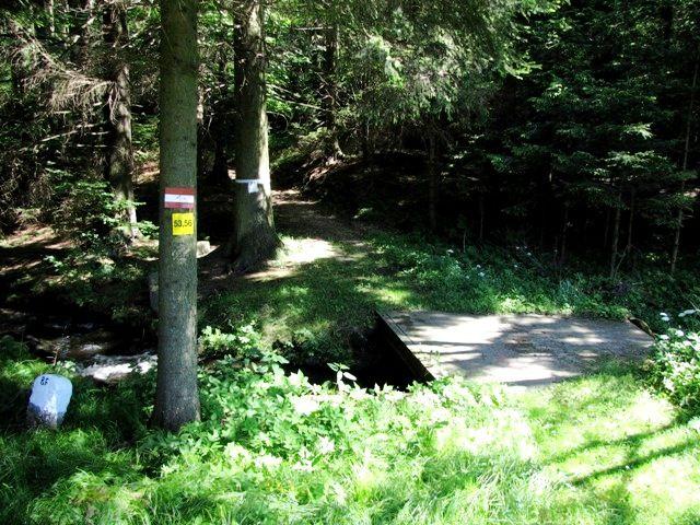 Das Waldbachl