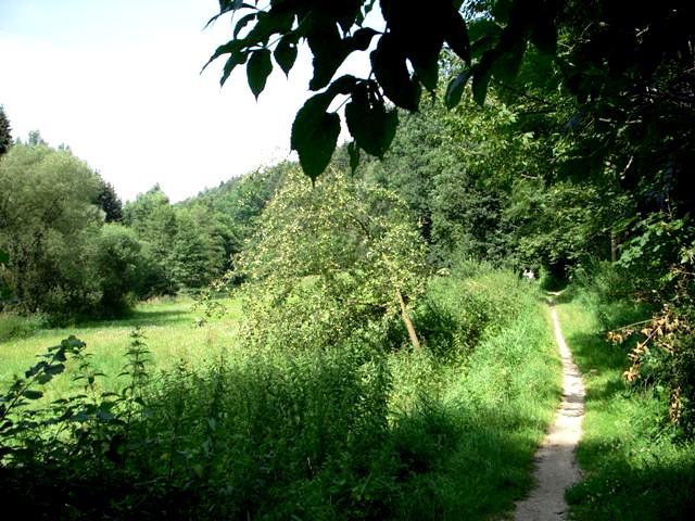 Walderlebnisweg 51