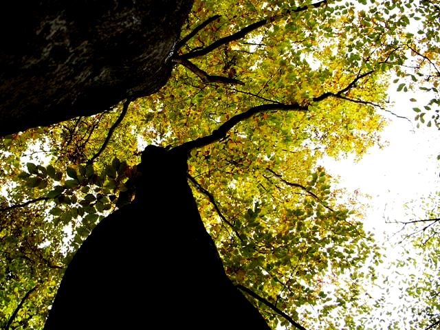 Singende Wälder