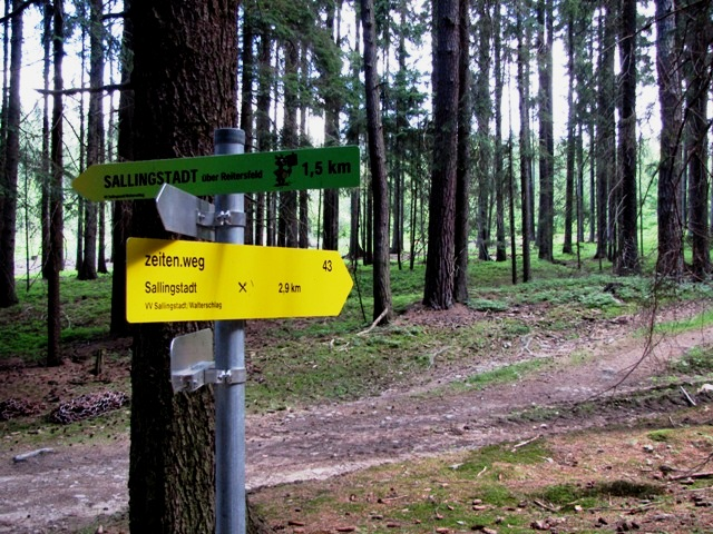 Im Prokopwald