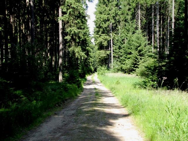 Ritzmannshofer Wald