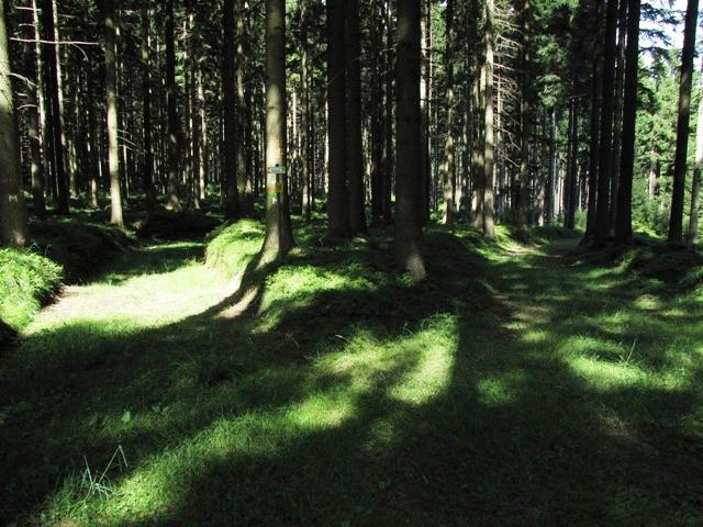 Hochwald bei Rabenhof
