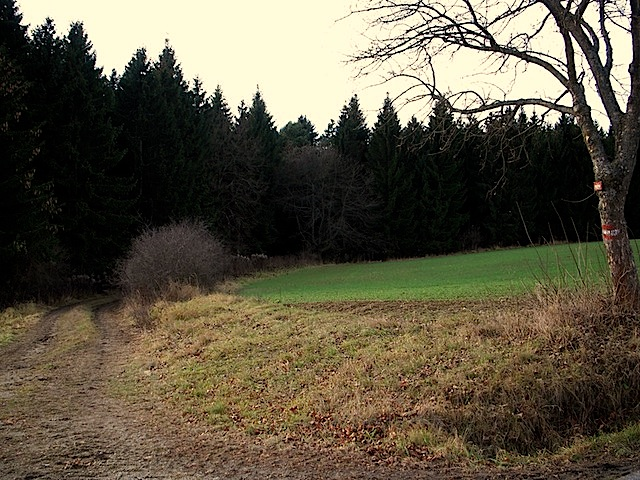 Abzweigung Richtung Wald