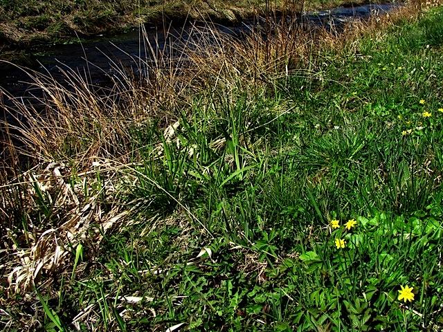 Gelbe Frühlingsblüher