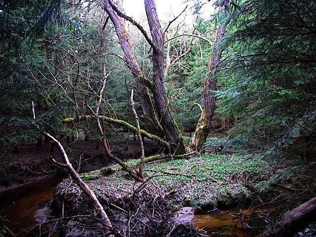 Elfen-Wald