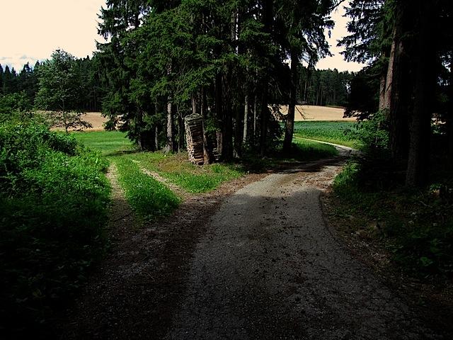 Waldweg Gegenrichtung