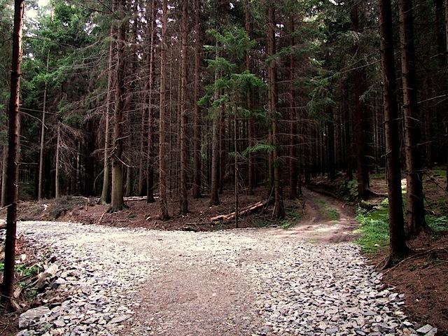 Neuer Forstweg