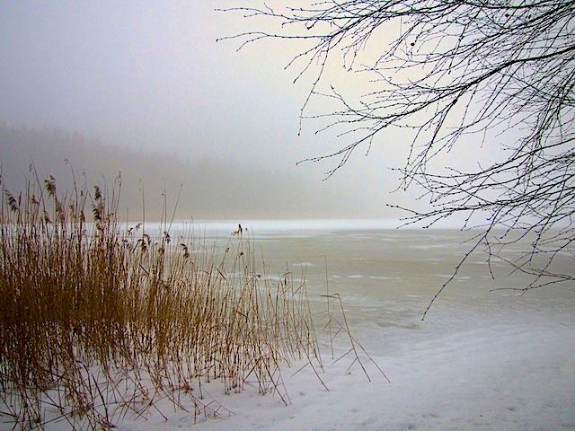 Nebel am Schönauer Teich