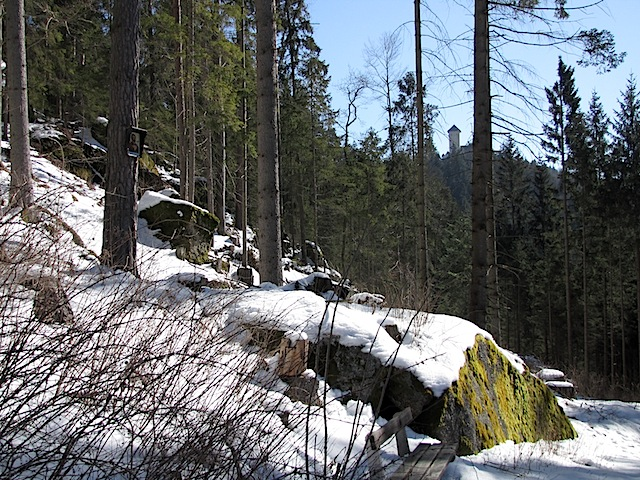 Bildbaum am Antoniberg