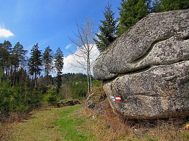 Waldweg mit Restling