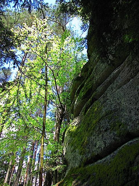 Am Arbesberg