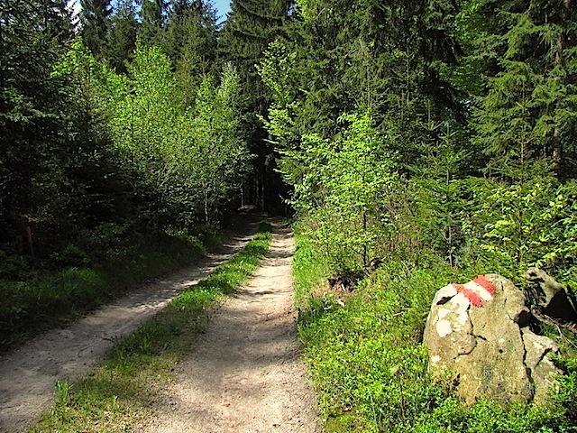 Waldweg bei Kamp