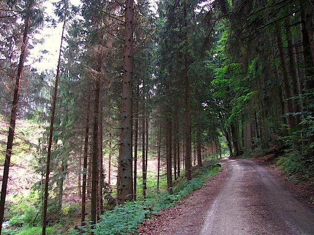 Im Tal des Krenbaches
