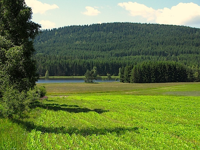 Richtung Teich