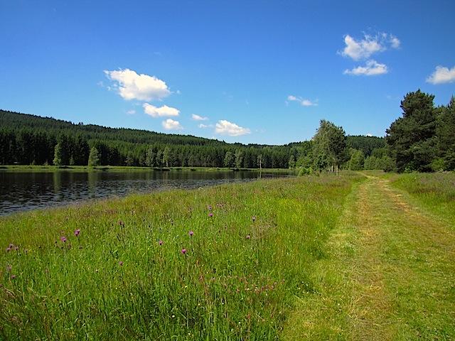Wiesenweg beim Teich