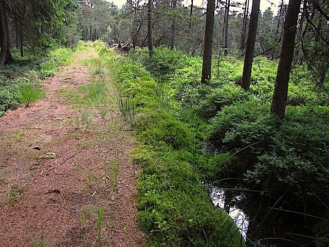 Am Moorgraben