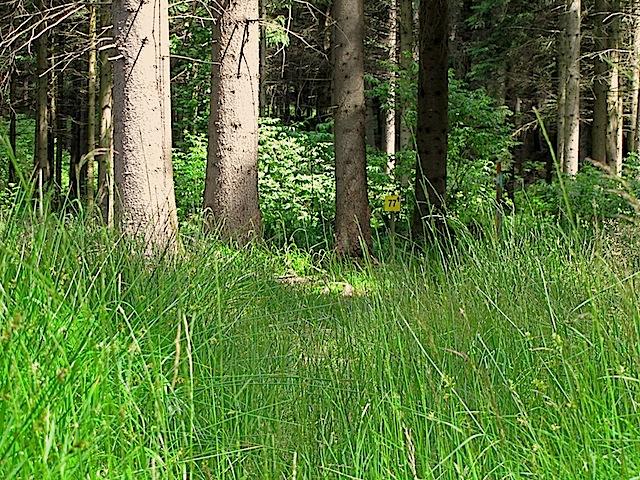 Moorgraswiese