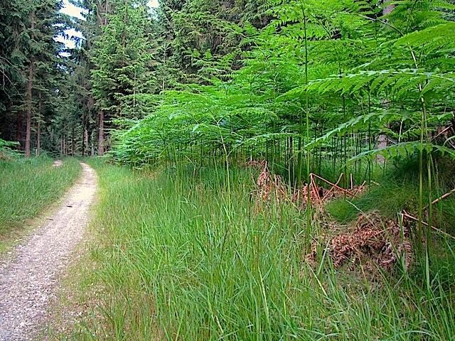 Sandiger Waldweg