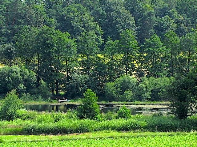 Der Schweizerhof-Teich