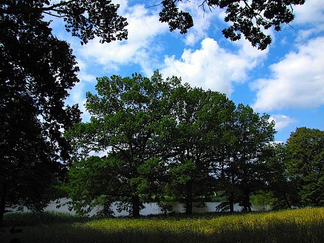 Der Drescher-Teich