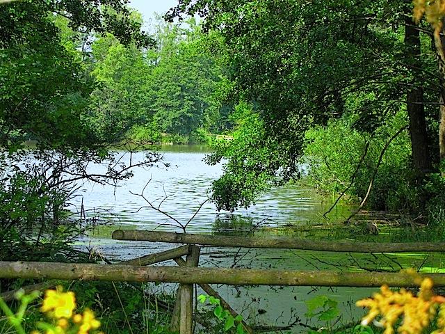 Der Park-Teich