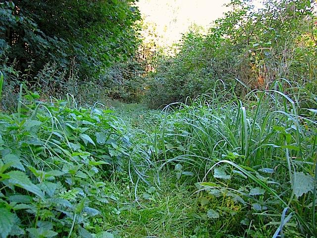 Grasweg durch den Wald