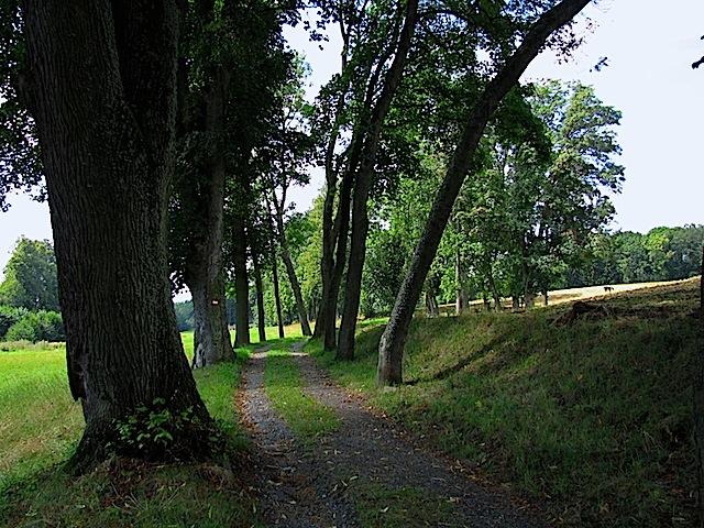 Linden-Ahorn-Allee