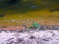 Uferpflänzchen