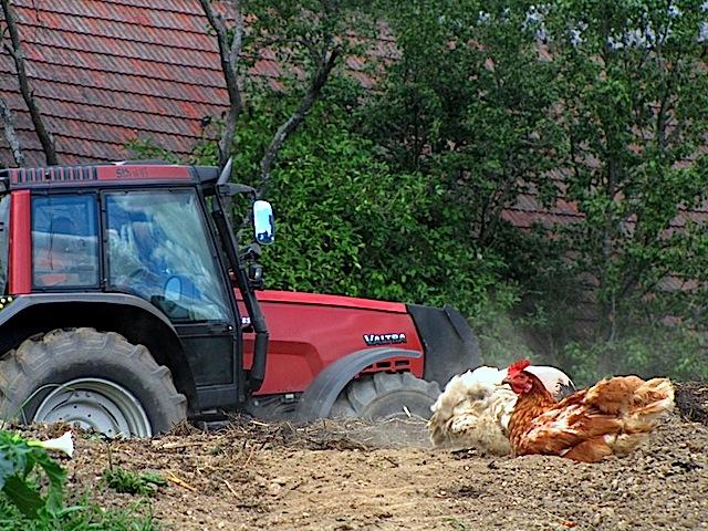 Huhn und Technik
