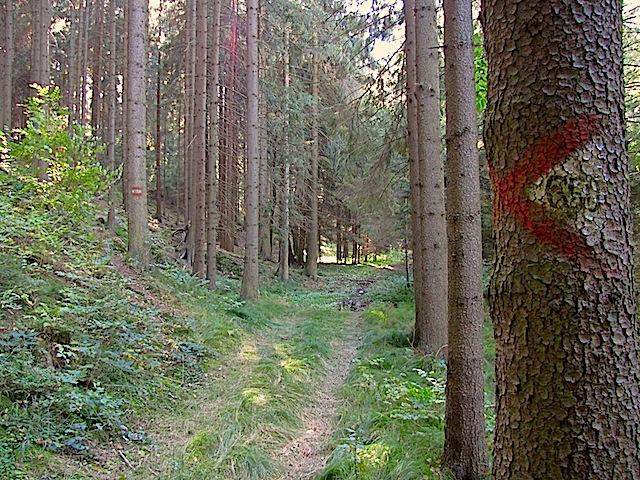 Waldweg und Abzweigung !