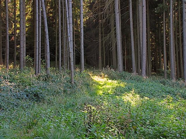 Forstweg in Sicht
