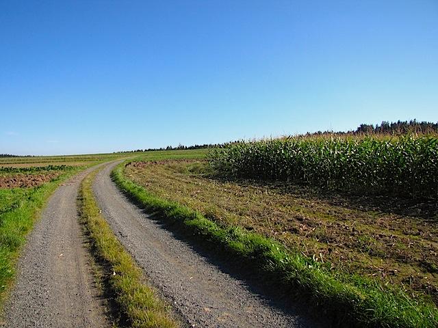 Richtung Pfarrwald